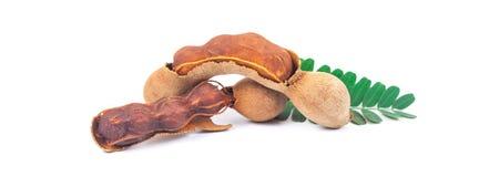 Tamarind - Sweet ripe tamarind Stock Photography