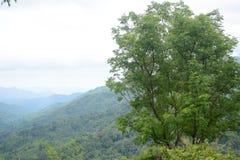 Tamarind tree Stock Images