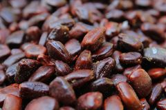 Tamarind Tree Seeds. Full screen Brown color, Natural Background image. Dark brown seeds royalty free stock photos
