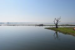 Tamarind tree at Taungthaman Lake, Amarapura, Mandalay, Myanmar. Old gnarled tamarind tree and boats, Taungthaman Lake. Myanmar Stock Image