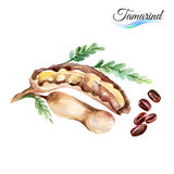 Tamarind Stock Photo