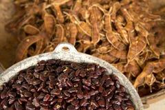 Tamarindenfrucht Lizenzfreie Stockfotografie