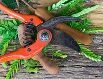 Tamarindo con la hoja y las tijeras Imagen de archivo libre de regalías