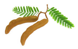 Tamarinds with green leaves Royalty Free Stock Image