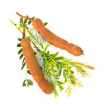 Tamarinds on white background Royalty Free Stock Images