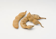 Tamarindus indica del tamarindo Imagenes de archivo