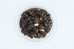 Tamarinier sec avec du sucre d'isolement sur le fond blanc photo stock