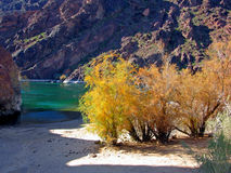 Tamarisk trees on the Colorado River below Hoover Dam, Nevada. Tamarisk trees are seen growing shore side on the Arizona side of the Colorado River below Hoover Stock Photos