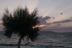 Tamariskträd på solnedgången, Agistri, Grekland royaltyfri bild