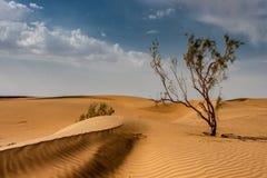 Tamarix tree in Iranian desert. Kavir desert landscape in Iran. Version 2 Stock Photo