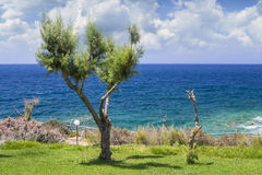 Tamarix trees and Mediterranean sea on a background. Crete. Island, Greece royalty free stock photography