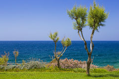 Tamarix trees and Mediterranean sea on a background. Crete. Island, Greece stock photography