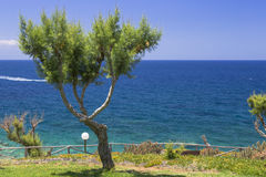 Tamarix trees and Mediterranean sea on a background. Crete. Island, Greece royalty free stock images