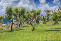 Tamarix trees and Mediterranean sea on a background. Crete. Island, Greece stock photo
