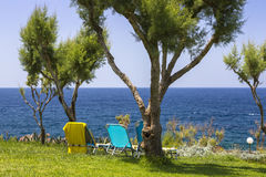 Tamarix trees and Mediterranean sea on a background. Crete. Island, Greece stock photos