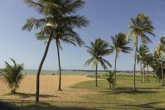 Tambau海滩-可可椰子树 库存图片