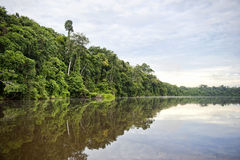 Tambopataprovincie Stock Afbeelding