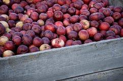 Tambor das maçãs Fotografia de Stock