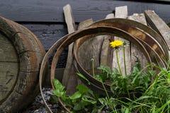 Tambores da flor e do barril Imagem de Stock Royalty Free