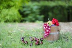 Tambores 6 da uva e do carvalho Foto de Stock