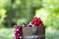 Tambores 5 da uva e do carvalho Fotos de Stock Royalty Free