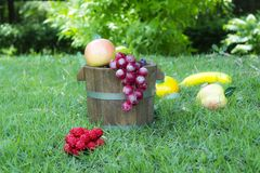 Tambores 4 da uva e do carvalho Fotografia de Stock