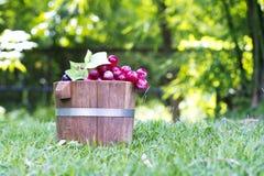 Tambores 7 da uva e do carvalho Fotografia de Stock Royalty Free