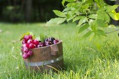 Tambores 8 da uva e do carvalho Fotos de Stock Royalty Free