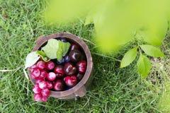 Tambores 9 da uva e do carvalho Foto de Stock