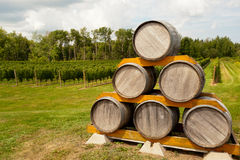 Tambores de vinho Fotografia de Stock Royalty Free