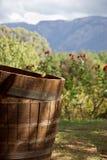Tambores de vinho. Fotografia de Stock