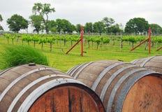 Tambores de vinho no vinhedo rural Imagem de Stock