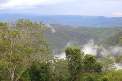 Tamborine山在Queenland澳大利亚 库存照片