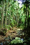 登上Tamborine国家公园 库存照片