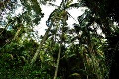 Национальный парк Tamborine держателя Стоковые Изображения