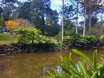 Tamborine góry ogródy botaniczni Zdjęcie Stock