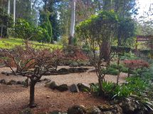Tamborine góry ogródy botaniczni Fotografia Royalty Free