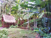 Tamborine góry ogródy botaniczni Obrazy Royalty Free