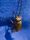 Tame gadfly. One rope + one insect = tame gadfly royalty free stock photo