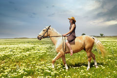 Tame of horse Royalty Free Stock Photos