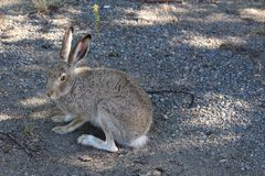 Tame wild rabbit Stock Photo
