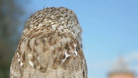 Tamed owl in the city. Close-up. Tamed owl in the city outdoors. Close-up stock video