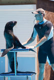 Tamer with a sea seal Stock Photo