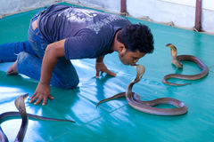 Tamer of snakes. See me working. The snake tamer kisses a Cobra during the show. The Island Of Koh Samui Thailand