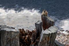 Tamia chez Holland Lake Photos libres de droits