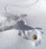 Tamia en trou en hiver Photo stock