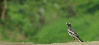 TAMIL NADU, INDIA - Kallanai thanjavu. Watching Point,bird birding TAMIL NADU, INDIA - Kallanai thanjavu stock image