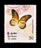 TamilLacewingCethosia nietneri, Butterfllies serie, circa 1978 Royaltyfri Foto