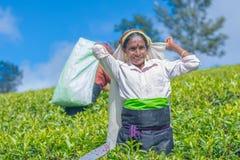 Tamilska kobieta która pracuje przy Dambetenna nieruchomością łama herbacianych liście Zdjęcia Stock