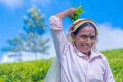 Tamilska kobieta która pracuje przy Dambetenna nieruchomością łama herbacianych liście Fotografia Royalty Free